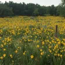 flower fields like this everywhere